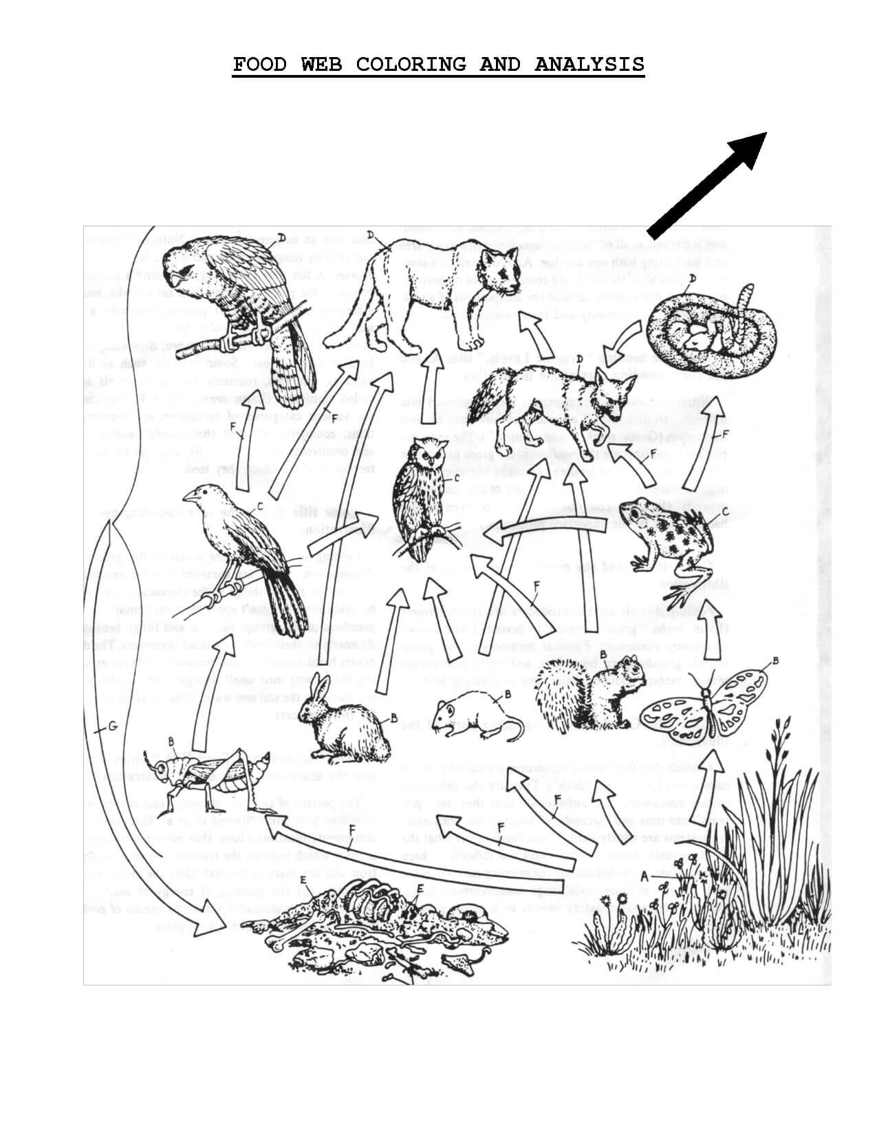 Food Web Coloring Sheet   Scope Of Work Template   Teach pertaining to Blank Food Web Template