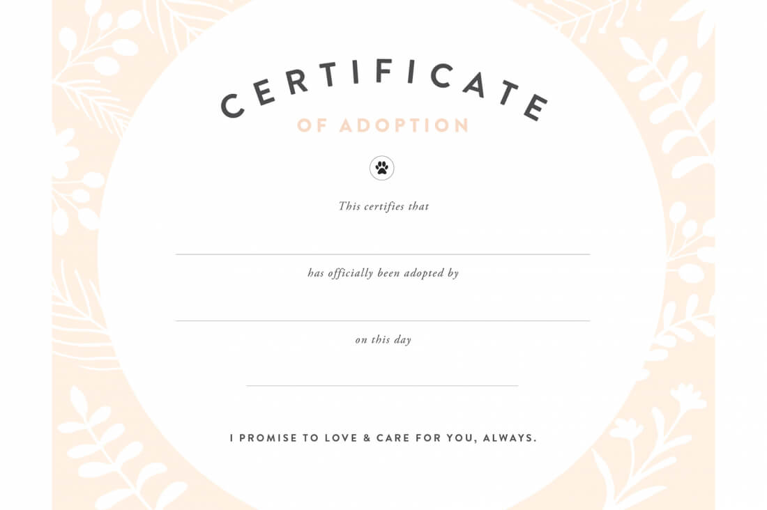 Pretty Fluffy Inside Toy Adoption Certificate Template