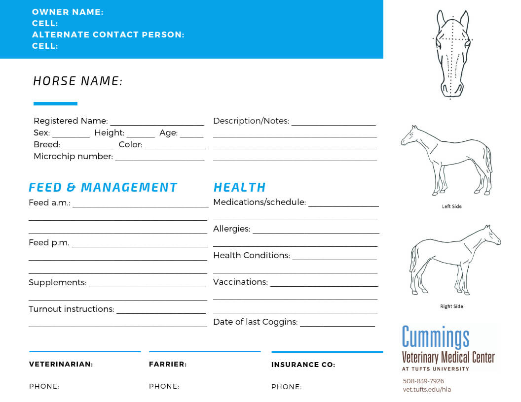 Travel Confidently | News At Cummings School Of Veterinary with regard to Horse Stall Card Template