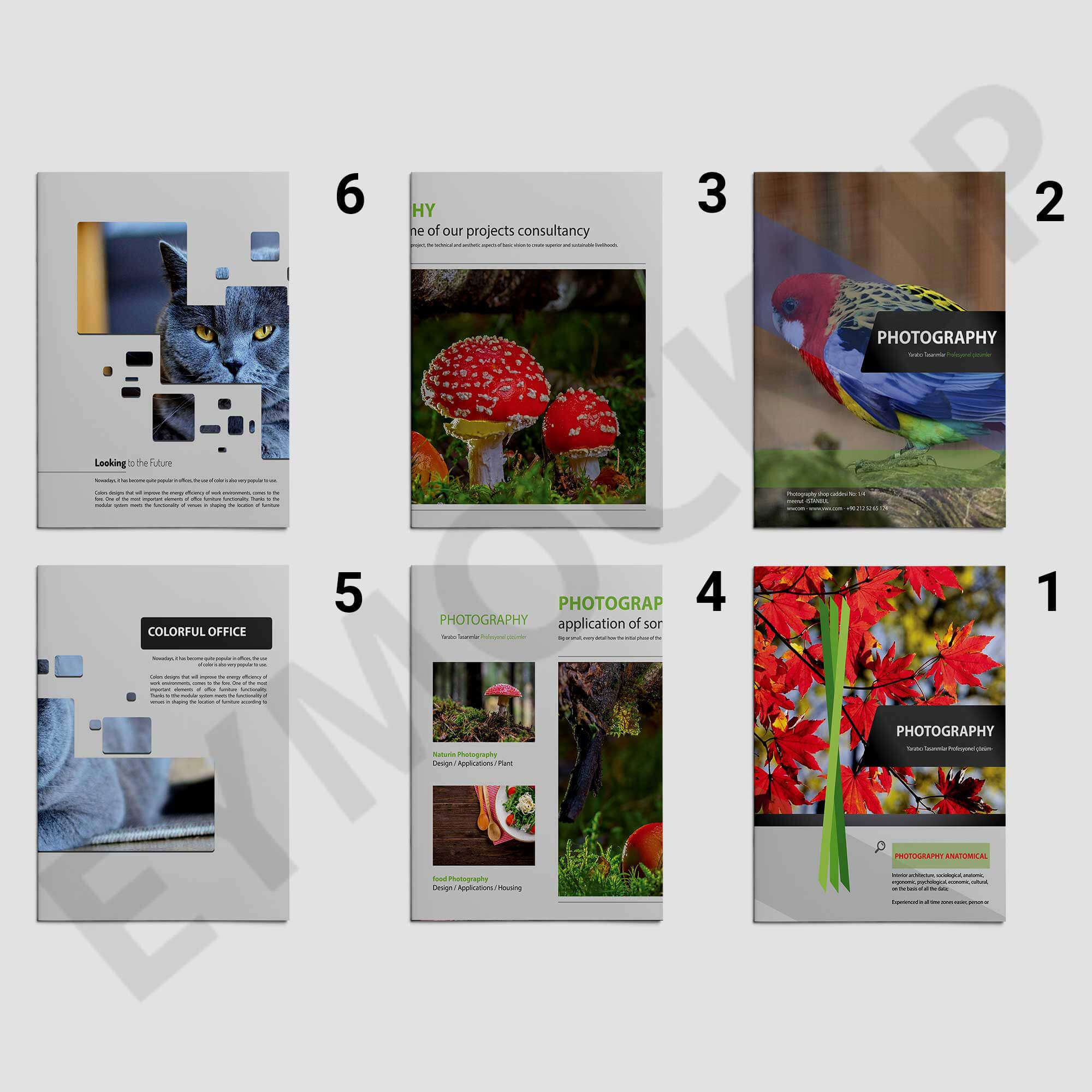 Zoo Photography Brochure Template | Eymockup intended for Zoo Brochure Template